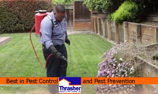 Thrasher Termite & Pest Control Pest Spraying