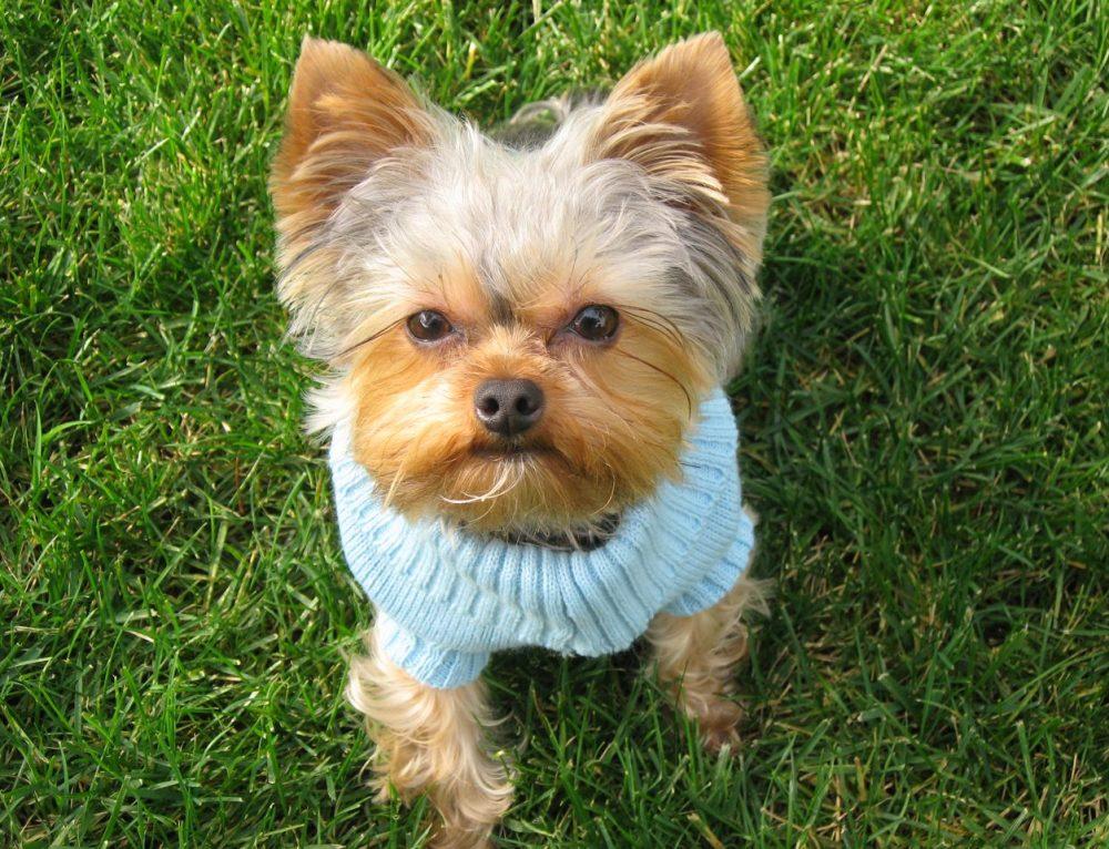 Dog Suffers Flea Bites without Fleas!
