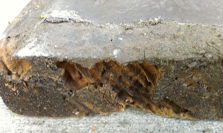 Subterranean termite damage to end grain in wood siding.