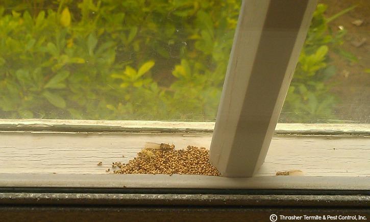 San Diego Termite Thrasher Termite Amp Pest Control