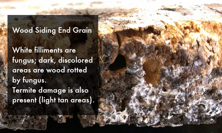 Fungus Damage