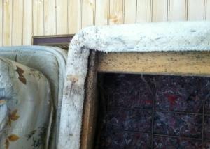 Bed Bug Fecal Spotting on Box Spring, Photo (c) Thrasher Termite & Pest Control, Inc.