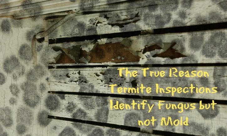 Termite Inspections Identify Fungus