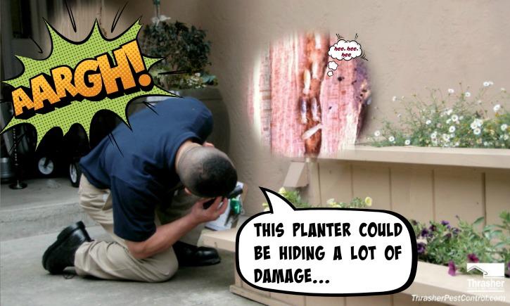 Inaccessible Areas Hide Termites