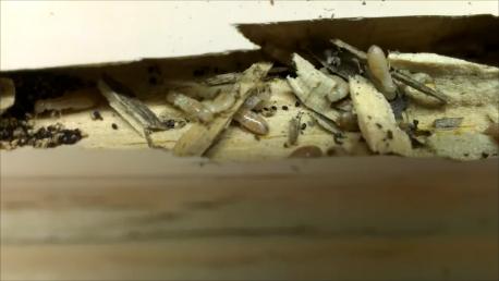 Termites Eating Wood Trim