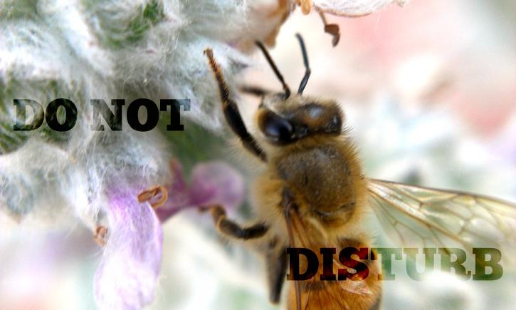 Do not disturb bees