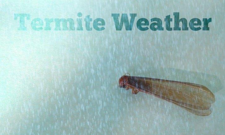 Termite Weather