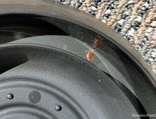 Bed Bug Furniture Interceptors on the Job