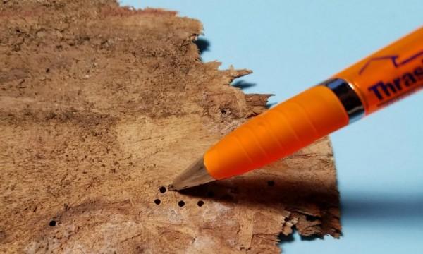 false powderpost beetle exit hole