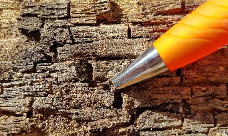 Dry Rot Fungus Checkered Wood Damage