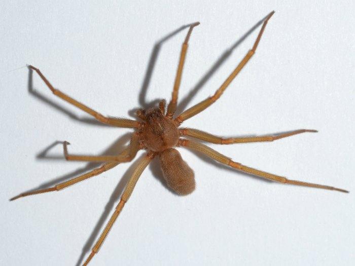 Pestworld Session Resources 2017 Thrasher Termite Amp Pest