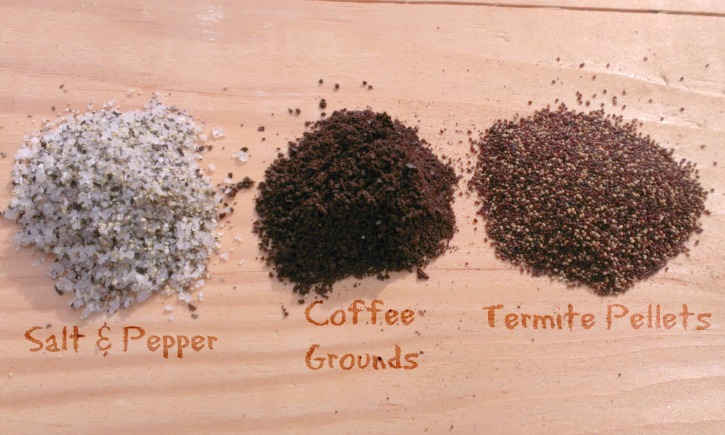 Do Termites Leave Sawdust ~ How to identify drywood termite droppings thrasher