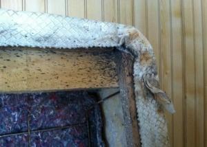 Bed Bug Photos Thrasher Termite Amp Pest Control