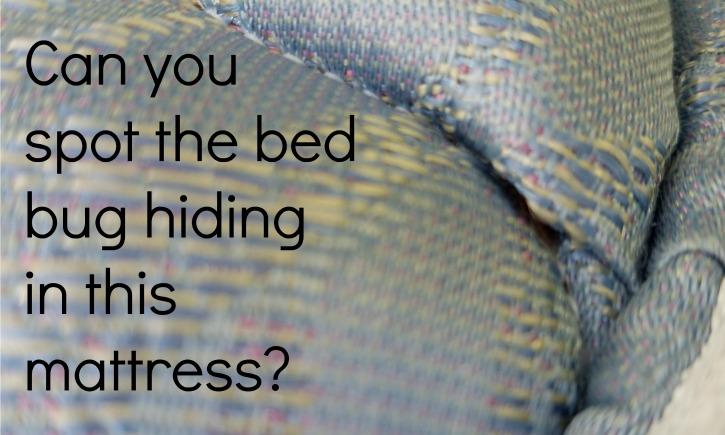 Hampton Inn North Conway Bed Bugs